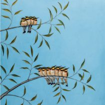 1614521850bee_eaters